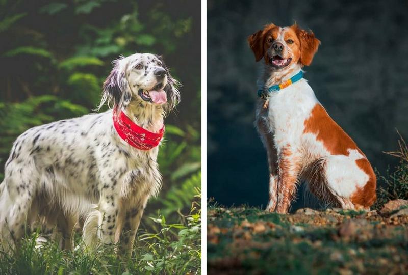 Trouver le chien parfait pour vous - comparaison de race de chien