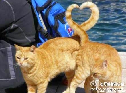 http://asalasah.blogspot.com/2014/11/apakah-ia-mencintaiku-ini-ciri-ciri.html