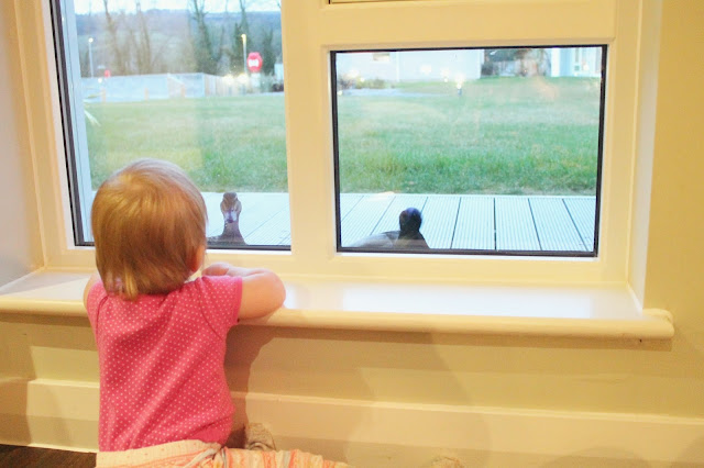 baby and duck staring at each other through window