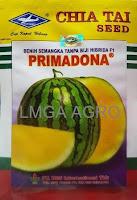 semangka f1 primadona,semangka non biji daging kuning,benih semangka f1 primadona,cap kapal terbang,semangka primadona