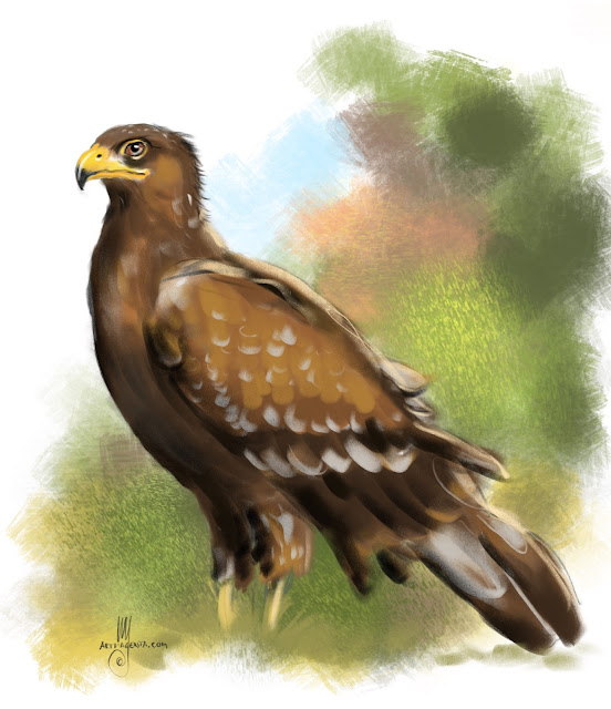 Lesser spotted eagle bird painting by Artmagenta