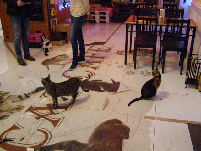 cafeneaua cu pisici, poza4