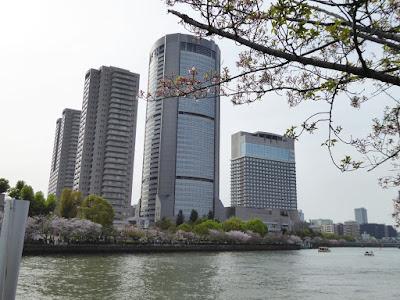 桜之宮公園の桜並木 大阪アメニティーパーク