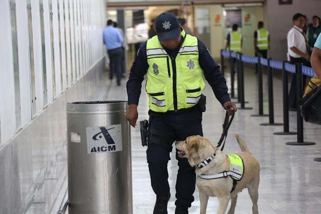 EN EL AICM, POLICÍA FEDERAL INTERCEPTA COCAÍNA Y FENTANILO PROCEDENTES DE COLOMBIA Y HONG KONG