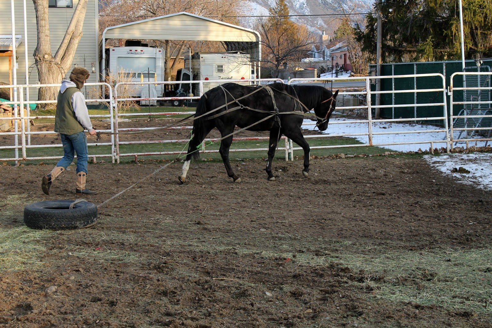 Did you know that the manure and bedding of just three ...
