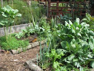 Puriscal organic vegetable garden
