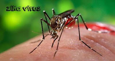 mengenal virus zika dan bagaimana penyebarannya