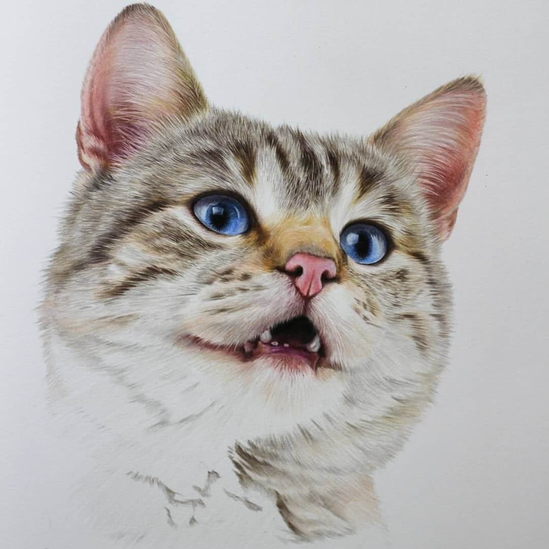 09-Cat-WIP-Jae-Kyung-Domestic-and-Wild-Animals-Pencil-Drawings-www-designstack-co