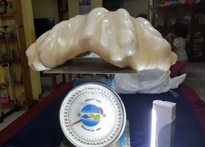 Mutiara terbesar di dunia seberat 34kg ditemui di Filipina