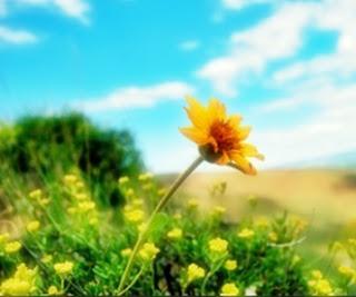 Arti Mimpi Melihat Bunga Anggrek Tumbuh Liar