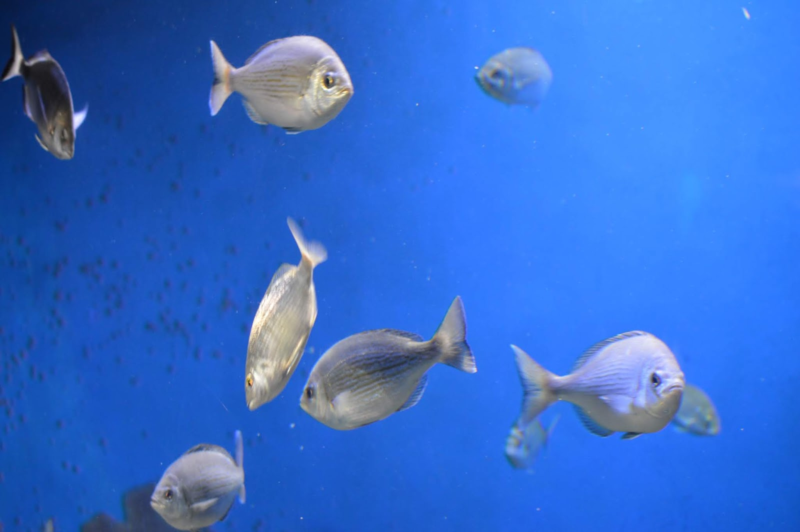 Visiting Palma Aquarium from Santa Ponsa - tropical fish tank