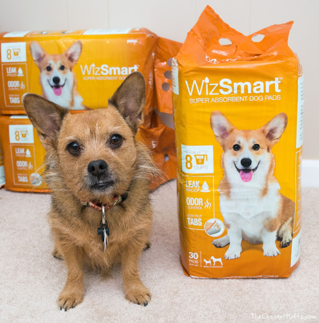 Jada and WizSmart Potty Pads