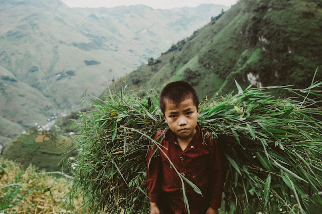 Visit Ha Giang season of ripe rice, contemplate the idyllic life 4