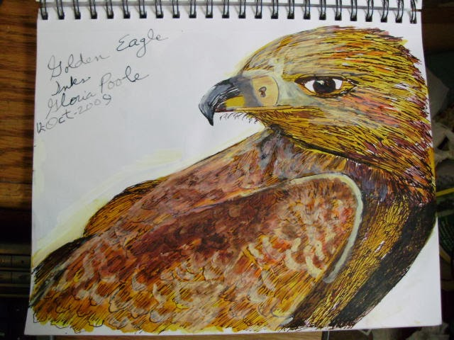 """Golden Eagle"" sketch by Gloria Poole of Missouri and Georgai; yr 2009 ;inks on paper"