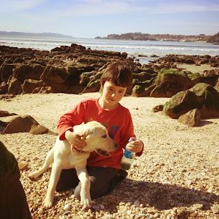 labrador, razas de perro para niños