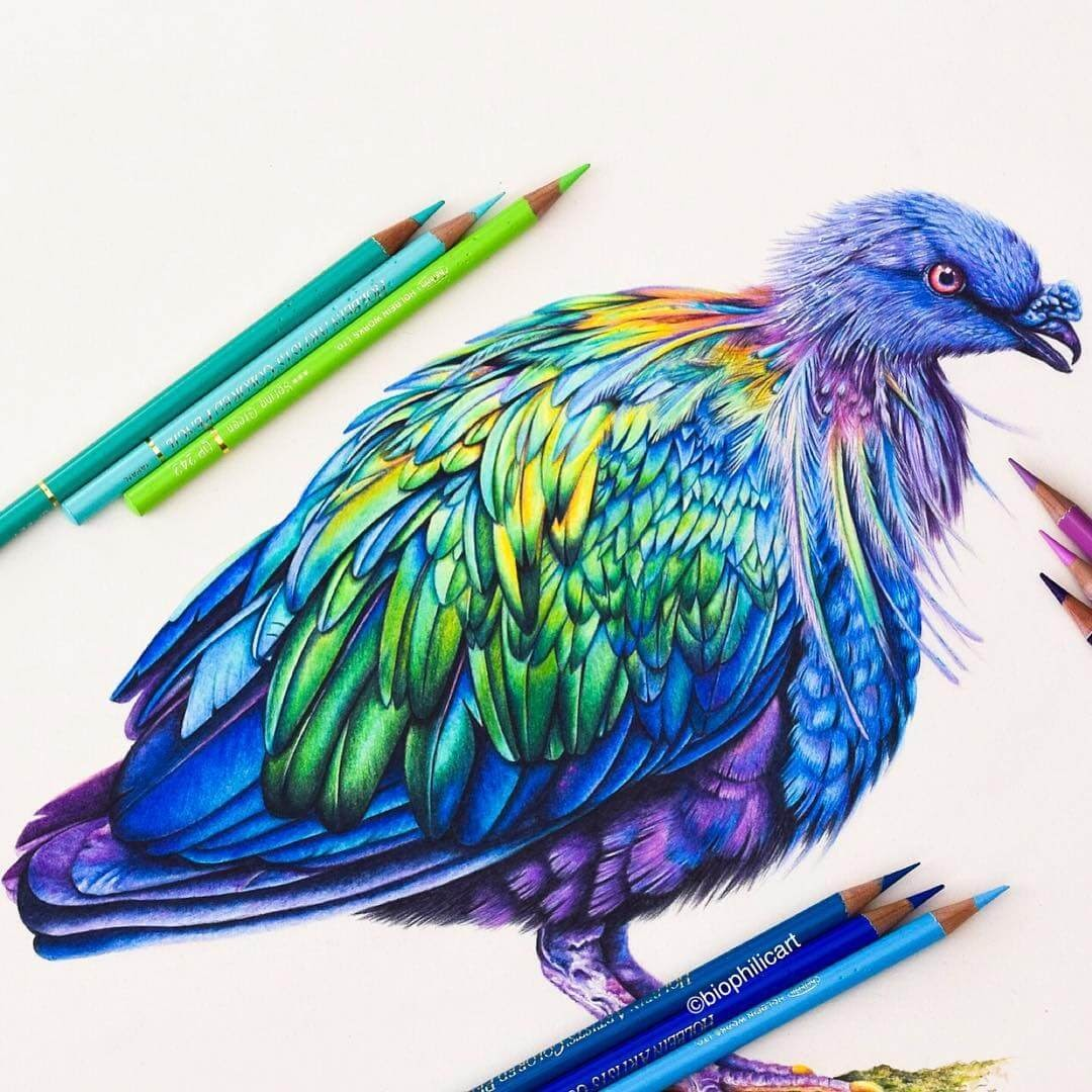 13-Nicobar-Pigeon-Sallyann-Brightly-Colored-Animal-Pencil-Drawings-www-designstack-co