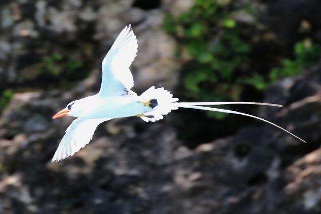 Isla Pájaros en Bocas del Toro