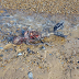 Man shares image claiming they are the remains of a mermaid on the beach (photos)