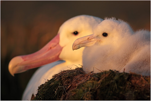 Life of an albatross: Tackling individuality in studies of populations