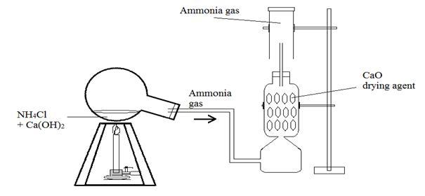 ICSE CHEMISTRY: Laboratory Preparation of Ammonia gas