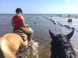 riitta reissaa, horsexplore