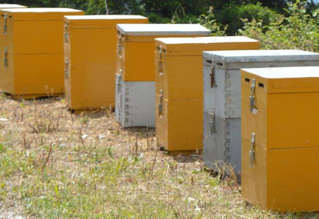 Το δυσκολότερο κομμάτι της μελισσοκόμιας: Γι αυτό τα παρατάνε οι μελισσοκόμοι...