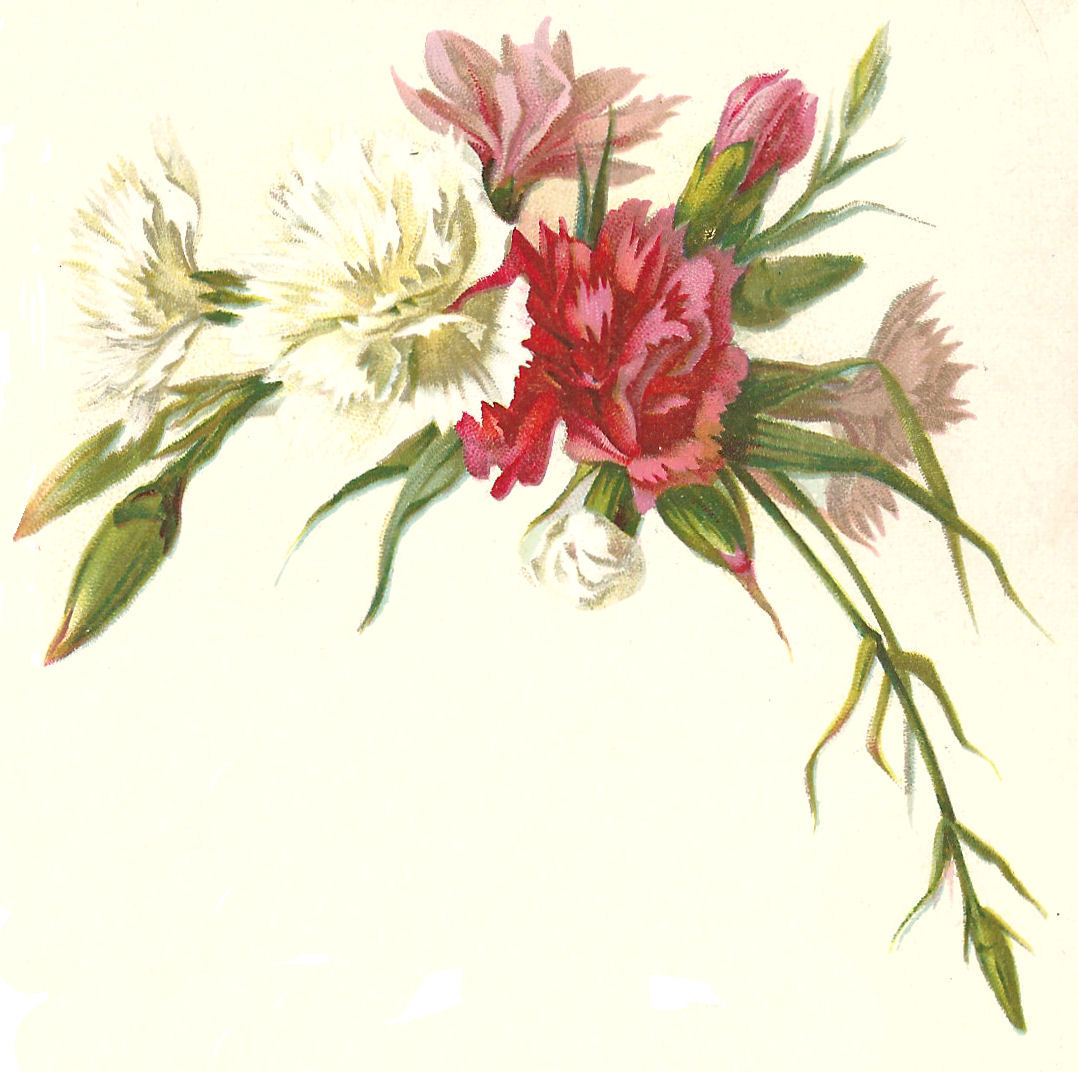 Antique Images Free Flower Graphic Red Pink And White Carnations