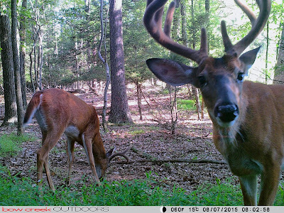 Scabies bucks county pa