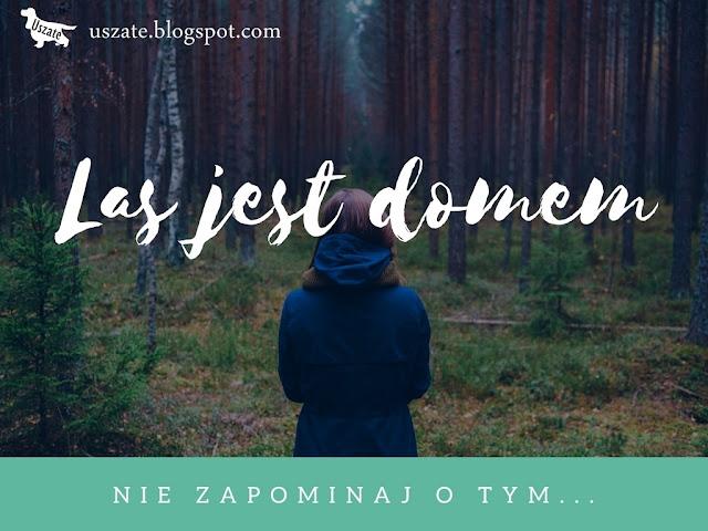 Las jest domem cz.II