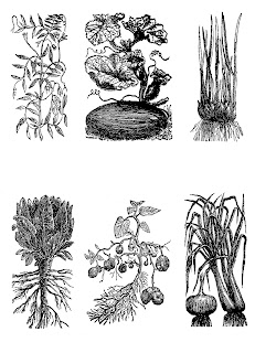 vegetable botanical clip art collage sheet download crafting