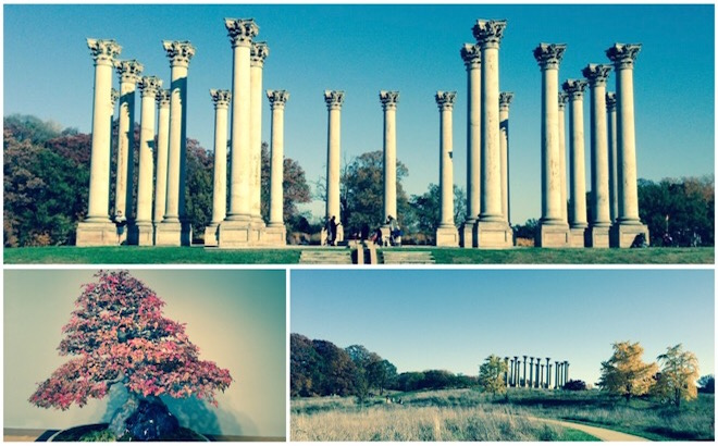 National Arboretum in autumn