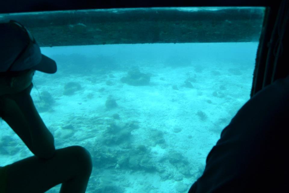d7ffe158b Dentro do Aquaspace observando a biodiversidade marinha
