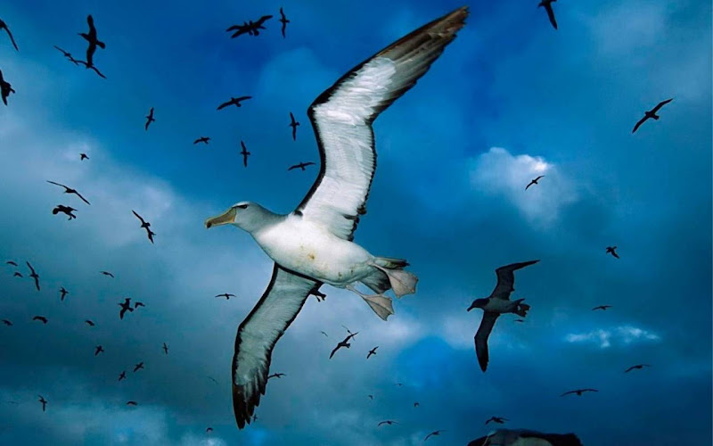 Beautiful Seagull Widescreen HD Wallpaper 3