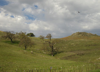 Oak trees and a rocky hill, Morgan Hill, California