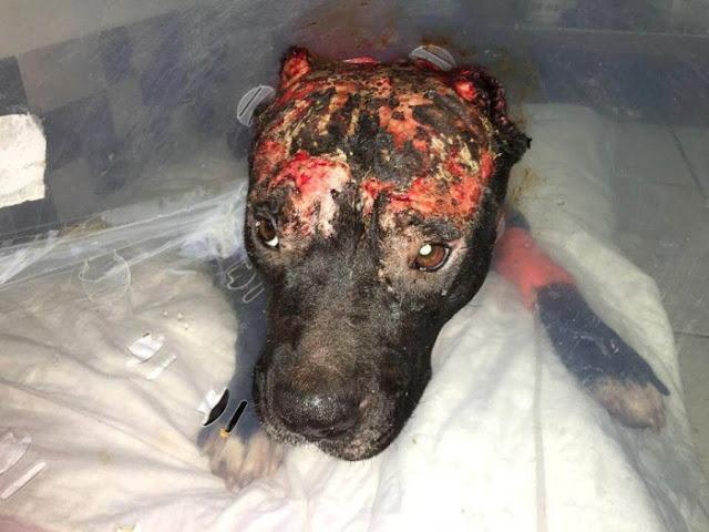 Kiara: la perrita quemada viva