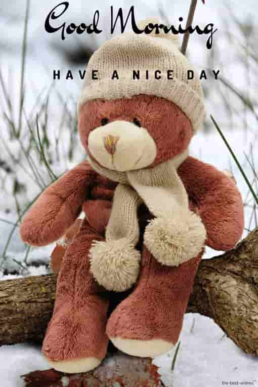 good morning with teddy have a nice day