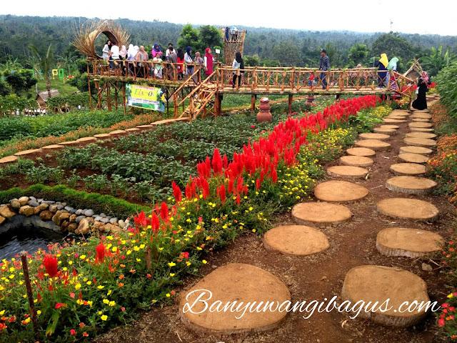 Taman cantik di Agro Expo Banyuwangi.