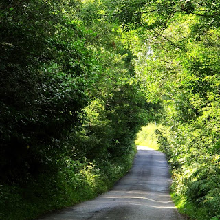 road surrounded by green bushy trees