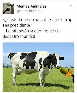 vaca mino de un desastre mundial