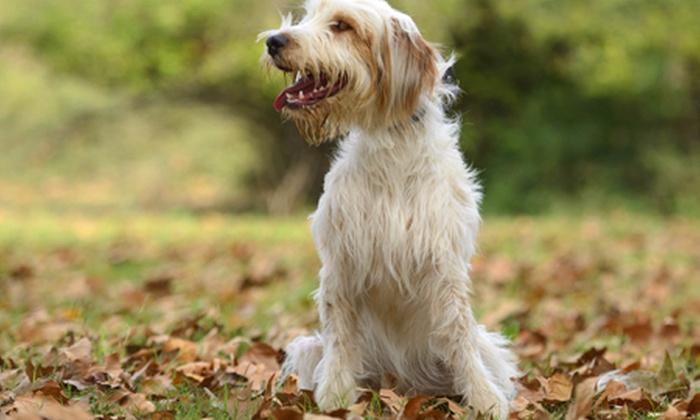 Nuncajamas cocker perros como evitar tener la casa llena de pelo - Perros para tener en casa ...