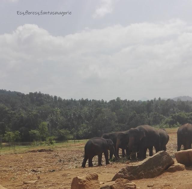 Sri Lanka - ciekawostki