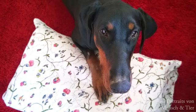 Alleinbleiben: Top 5 Hundeunsinn