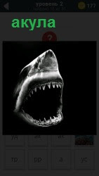 ответ на 2 уровень акула