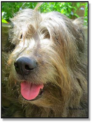 Lotte, mein Herzenshund