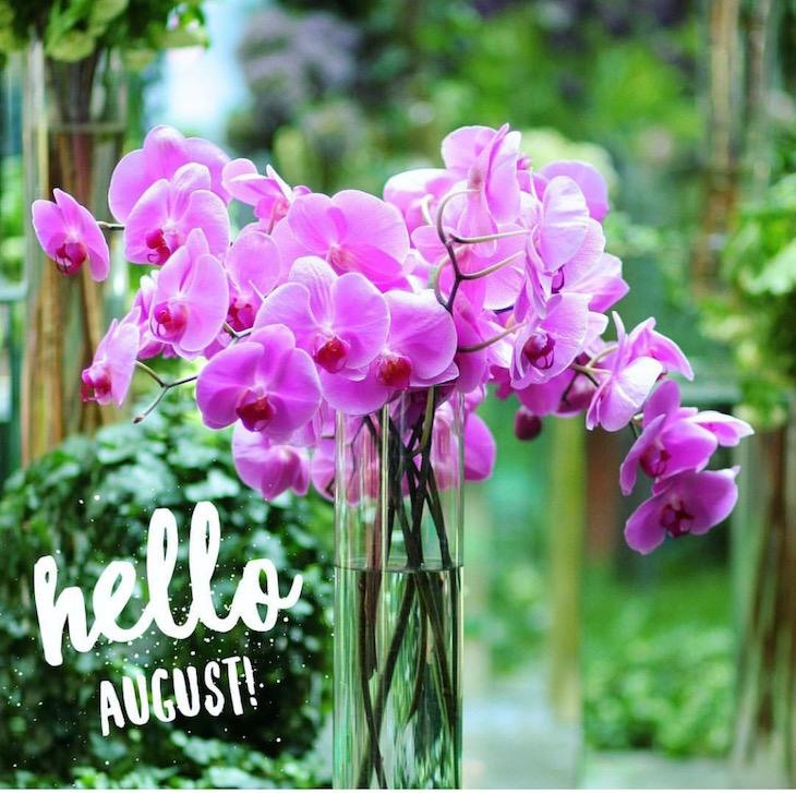 Hello-August-2016-Vivi-Brizuela-PinkOrchidMakeup
