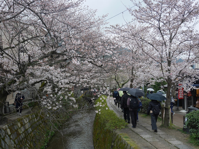 philosopher's walk in Kyoto lined with blossoming sakura trees