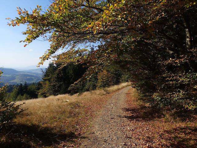 Żwirowa, wygodna ścieżka prowadzi w stronę najwyższej góry Beskidu Wyspowego