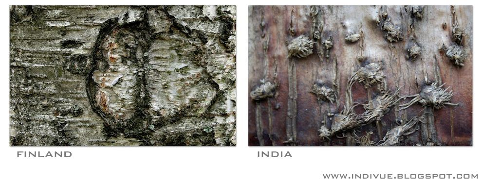 Intialainen puun kuori ja suomalainen puun kuori