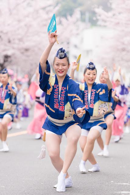 せいせき桜まつり、満開の桜の下で踊るひょっとこ連の女性の団扇踊り