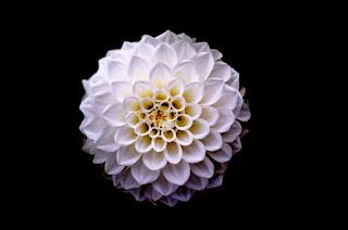 13 Ayat Al Quran Tentang Warna Putih